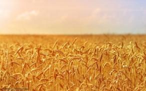 Биологические основы земледелия